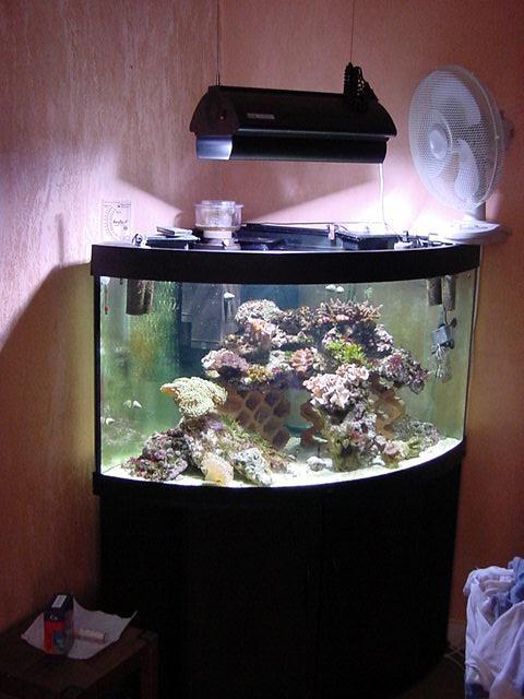 Aqua goldfish aquarium d 39 angle for Aquarium angle